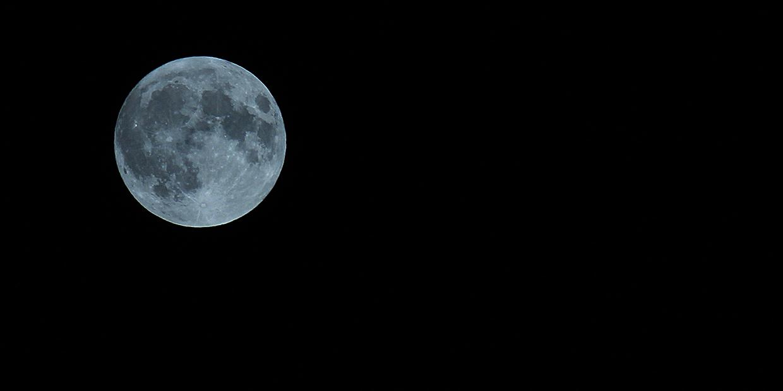 Bark at the moon!